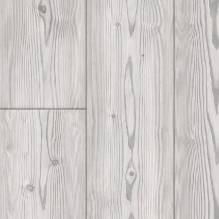 White-pine.jpg